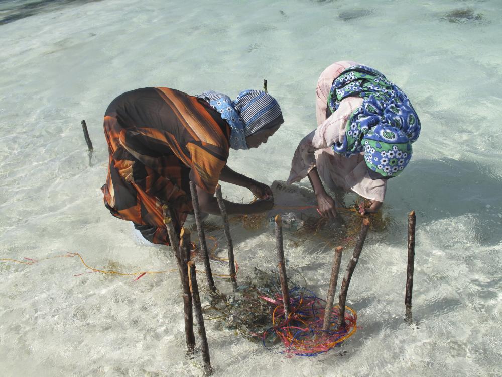 Zanzibar | Seaweed Farmers | Joanna Lipper