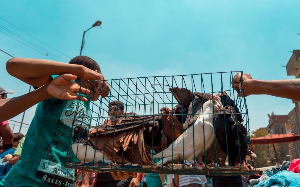Souq Al-Gomaa (Friday Market)